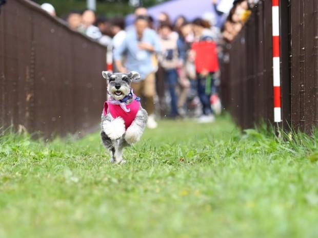 髭犬ダッシュ (3)
